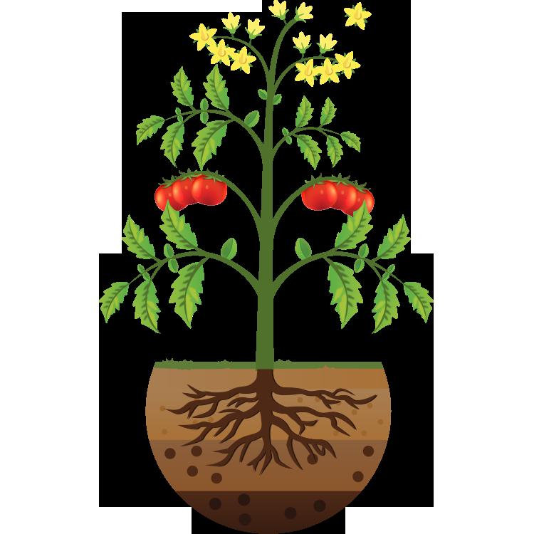 La planta y sus órganos