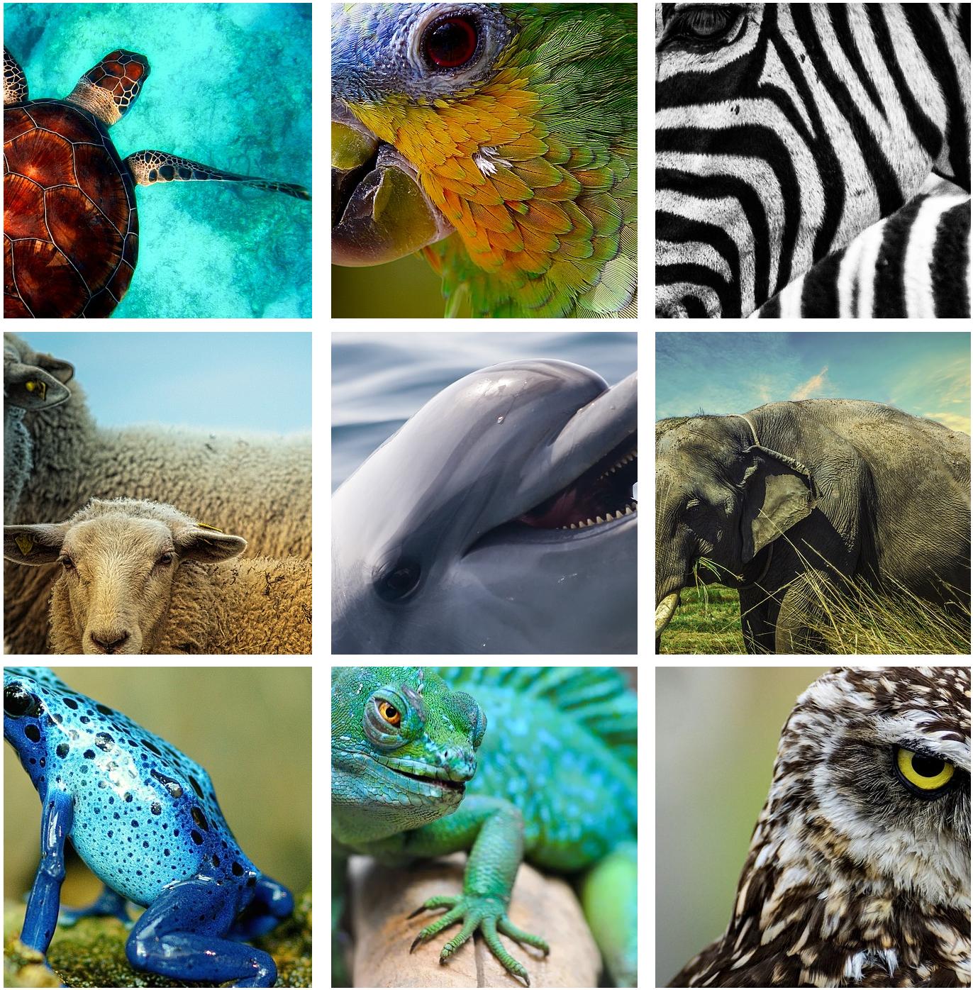 Los animales y su cubierta corporal